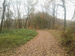 Mein Märchenwald